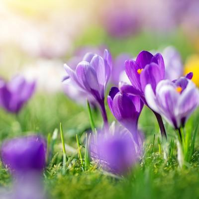 Lawn Care Tips for April