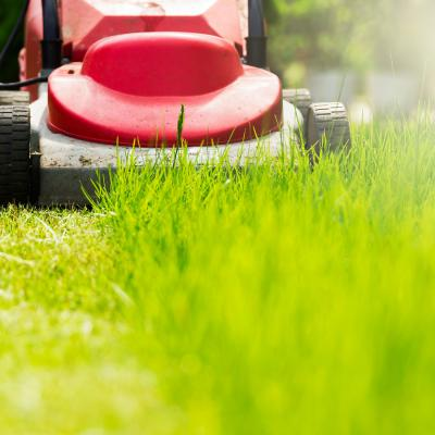 Lawn Care Tips for June