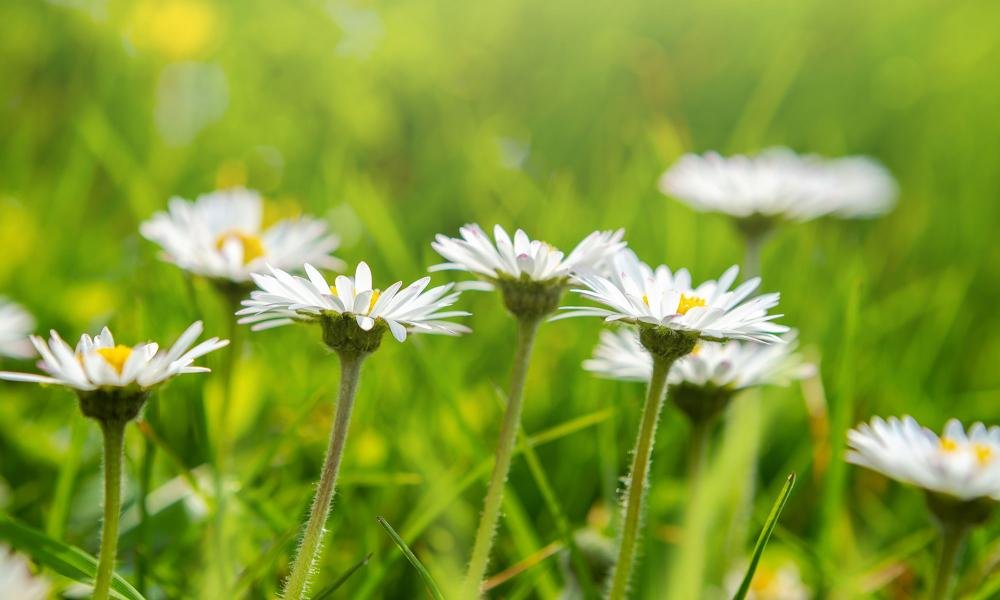 Lawn Care Tips for May