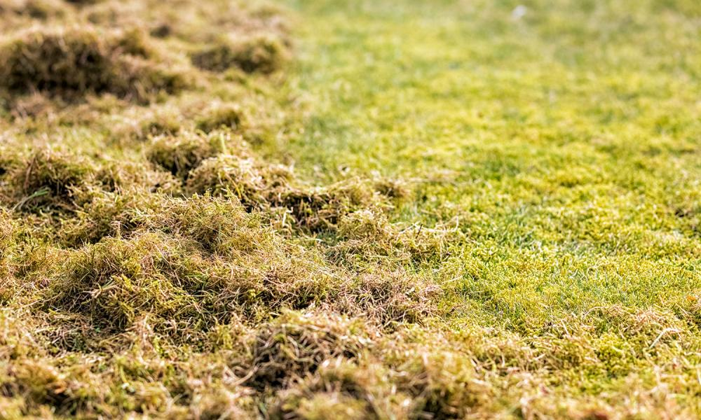 Lawn Care Tips for March